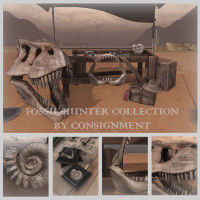 Consignment  - Fossil Hunter Collection